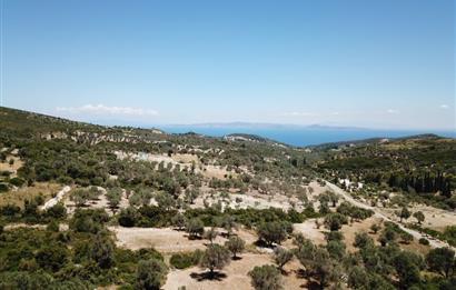Kösedere Köyünde Deniz Manzaralı Zeytinlik ... Büyük Parsel..
