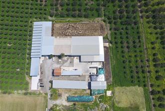 Foçada satılık ruhsatlı çiftlik